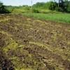 Что такое почвогрунт и его популярные виды