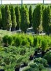 Питомник растений и деревьев «Флора Сервис»